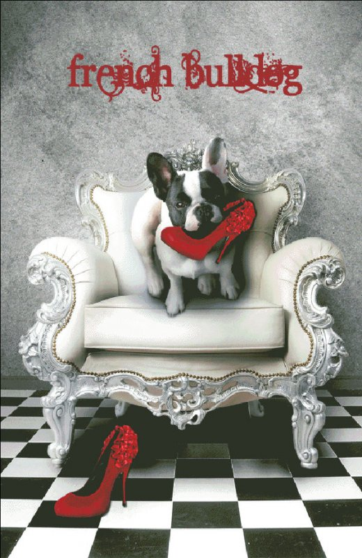 French Bulldog - Click Image to Close
