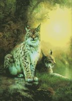 Two Lynxes
