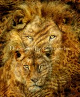 Moods Of Africa Lions