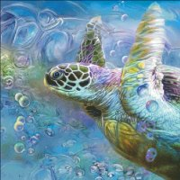 Sea Turtle Spirit Of Serendipity MC