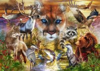 North American Mammals Max Colors