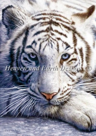 White Tiger Penfound