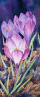 Diamond Painting Canvas - First Of Spring