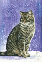 TT Winter Tabby