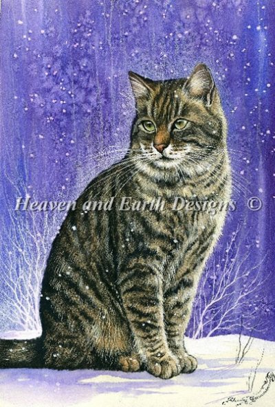 Winter Tabby