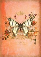 Butterfly Port Peach