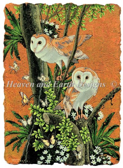 Barn Owl Max Color
