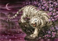 White Tiger Cherry Blossoms