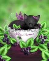 Mini Blackberry Kitten