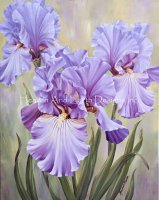 Mini Mauve Irises NO BK