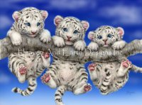 Mini White Tiger Triplets