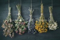 Hanging Bunches Of Medicinal Herb