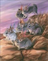 Chinchilla Cavalry