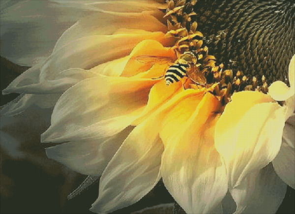Supersized Sunflower Bee