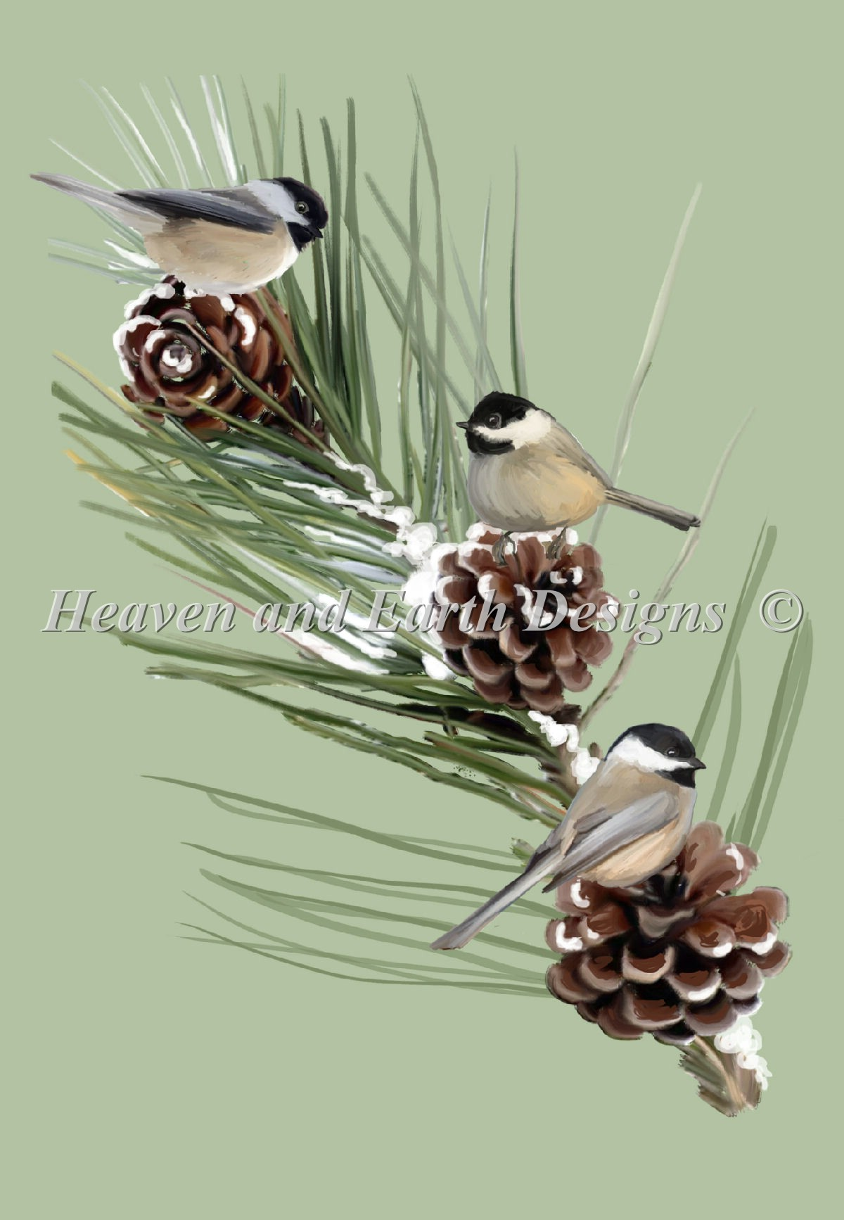 Chickadees Firbranch NO Background