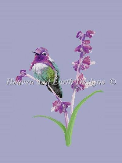 Costash Hummingbird