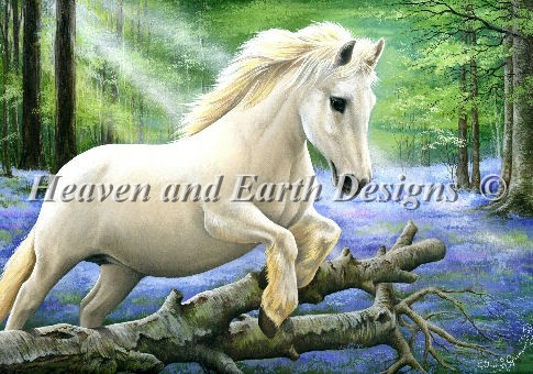 White Pony In Bluebell Wood - Click Image to Close