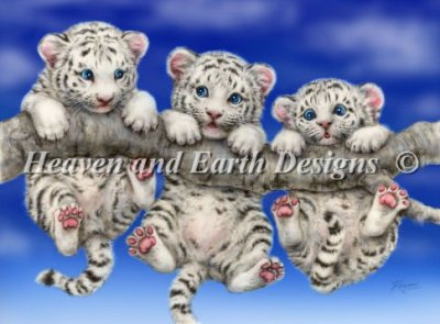 White Tiger Triplets - Click Image to Close