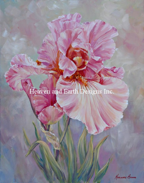 Pink Iris - Click Image to Close